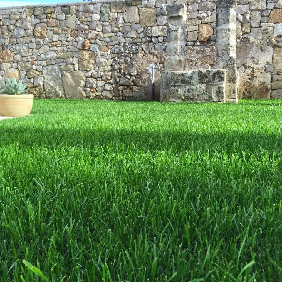 Home archistyle for Festuca prato