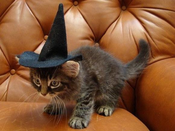 costume-halloween-gatto-strega